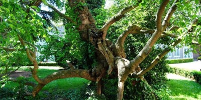 (Te) Gekke Bomenwandelingen